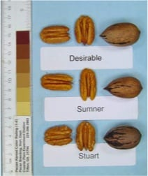 Sumner, Stuart and Desirable pecans, a pecan tree nursery with container and bareroot pecan trees for sale, we are a retail and wholesale pecan nursery.