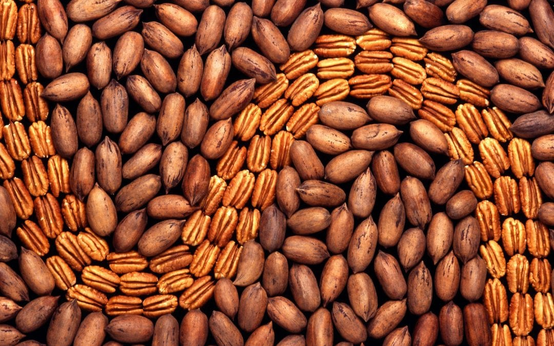 More Facts About Pecans and Pecan Trees