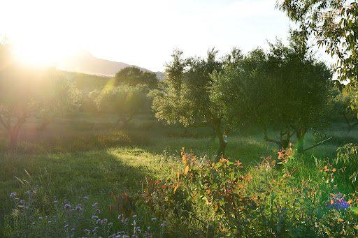 Pecan Tree Health Guide